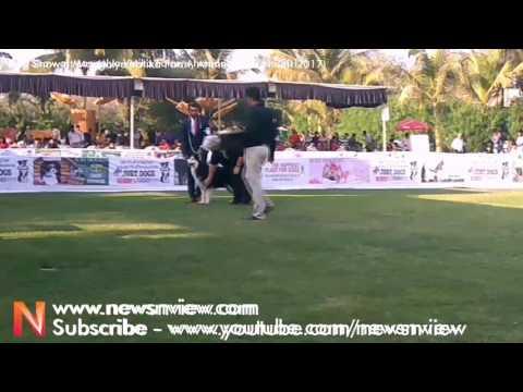 Dog Show Ahmedabad | Dog Show 2017 | Mangalya Vatika Party Plot Ahmedabad