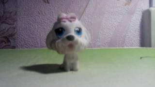 Фильм про собак