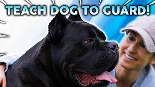 How To Teach YOUR DOG TO GUARD!