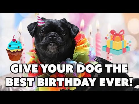 10-easy-ways-to-give-your-dog-the-best-birthday-celebration-ever--diy-doggy-birthday-party