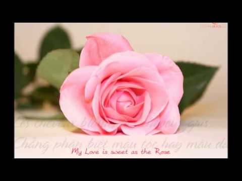 La maladie d'amour   Michel Sardou   Lyrics   YouTub