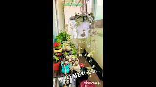봄부터 여름까지 베란다정원 꽃들..
