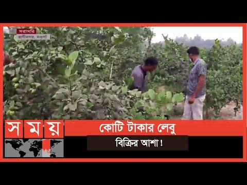রোজা ও করোনার কারণে ব্যাপক চাহিদা লেবুর   Naogaon News   Business News   Somoy TV
