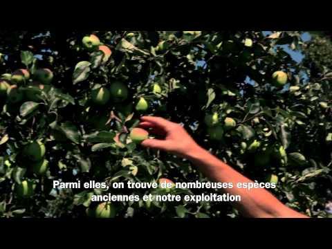 Migros Interview: Production de fruits TerraSuisse