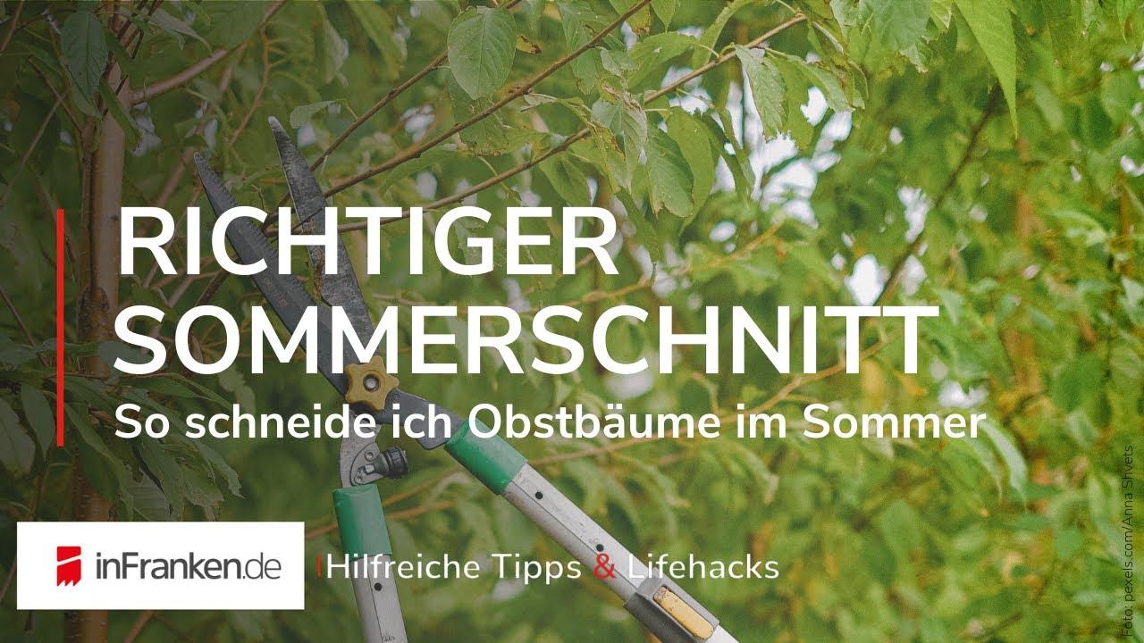 Videoanleitung Der Sommerschnitt An Obstbaumen Youtube