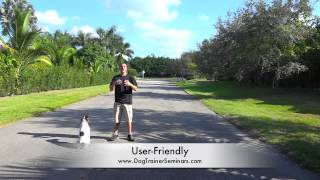 1.5 Year Old Gsp! Private Training Seminar In Fort Lauderdale, Florida! Dog Training With Nick White
