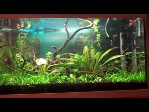 Мой аквариум Aquael CLASSIC 60, 54 литра - история приобретения