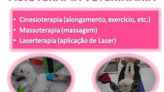 FISIOTERAPIA VETERINÁRIA - reabilitação pós cirurgica de colocefalectomia