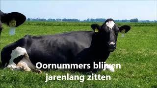 Boer Gerrit vlogt   Koeien met gele oorbellen