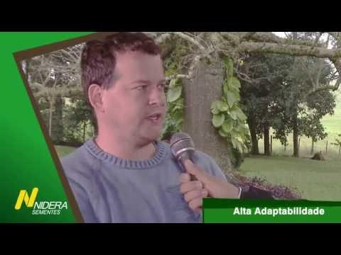 Nidera - Alisson Hilgemberg - Campeão Nacional Produtividade Soja 14/15.