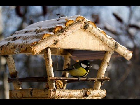 Как помочь птицам зимой. Кормушки для птиц