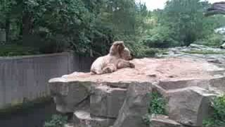 Riga-Berlin-Riga: Video 45 (Берлинский Зоопарк - Кнут! / Berlin Zoo - Knut the Polar Bear)