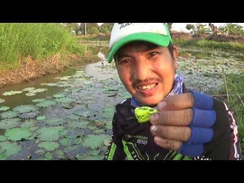 Snakehead Fish with Kobkaekhan Thailand Rubber Lure กบยางแก้คัน หมายแบบนี้ต้องกบยาง