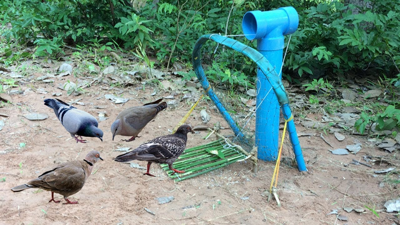 Awesome Quick Bird Trap Using PVC Pipe And Net That Work 100% - YouTube