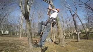 Grubb Tree Service, Charlottesville VA