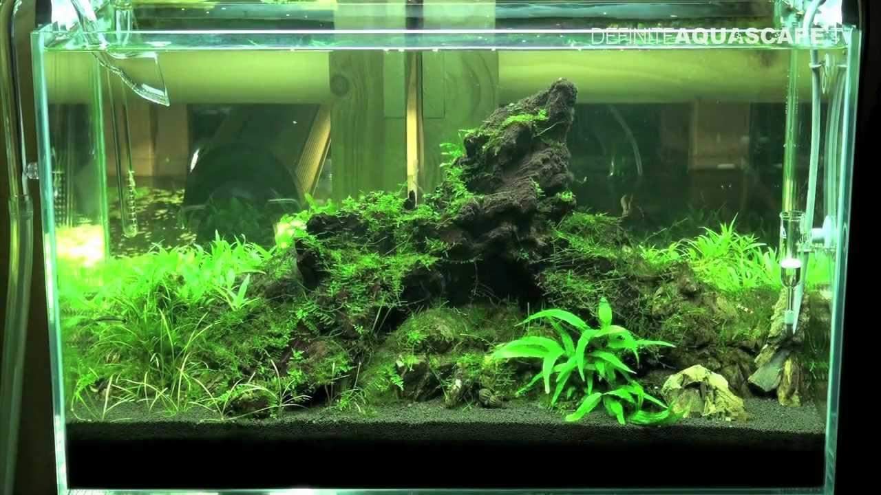Aquascape - Planted tank 60x30x36 (iwagumi) - YouTube