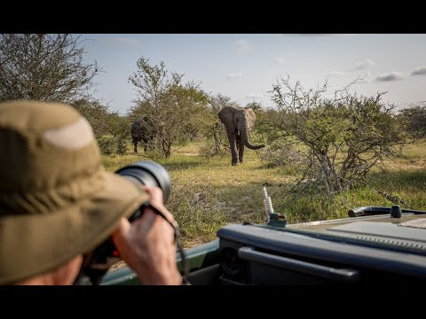 Learn to Become a Wildlife Photographer in South Africa