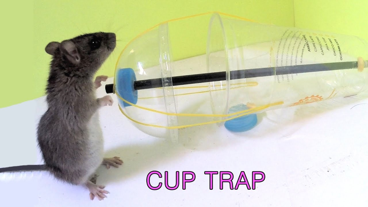 Disposable Cup Mouse Rat/Trap
