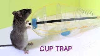 Disposable cup rat/mouse trap
