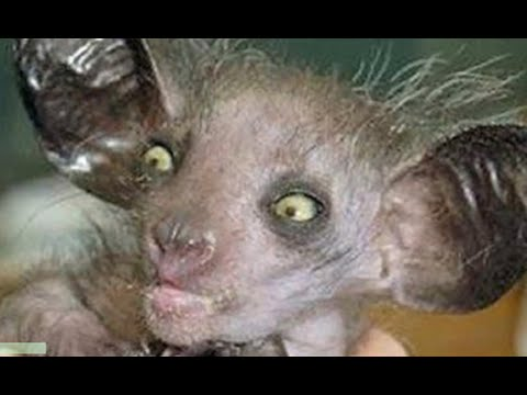 WORLDS MOST UGLIEST ANIMALS EVER - YouTube