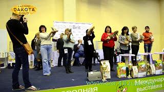 Международная выставка кошек, Харьков, 5 марта 2017, Best and Show