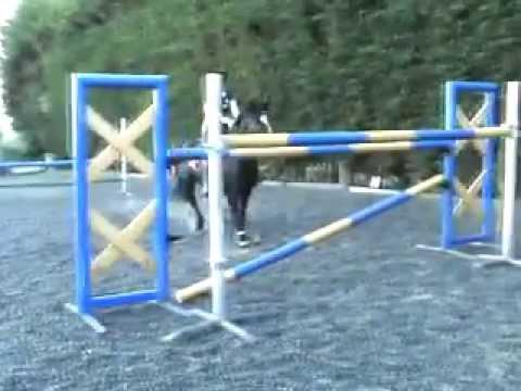 14hh pony jumps 1 40m i wholly encourage push horses ability show ...