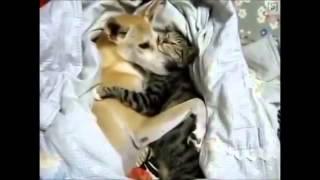 Кошка лучший друг собаки