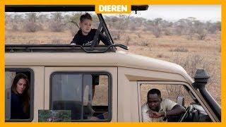 Uniek: Python eet hyena op (en Sietse van 8 ziet het)