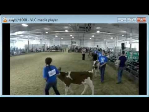 2016 Lancaster County Super Fair - 4-H Bucket Calf Show