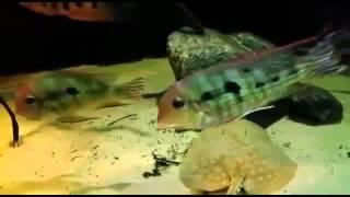 altum biotop Aquarium