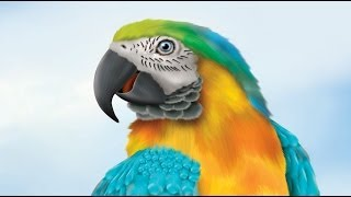 how to draw cartoon animal parrot speedart