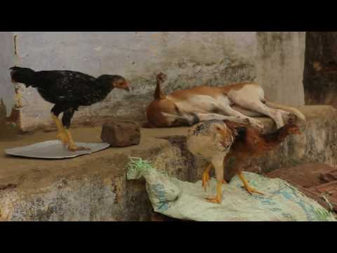 'NJAN MOOPAN' - A day in the life of a Moopan (Documentary)