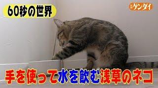 【チャンネル登録、よろしくお願いします!】 猫好き必見! 東京・浅草...