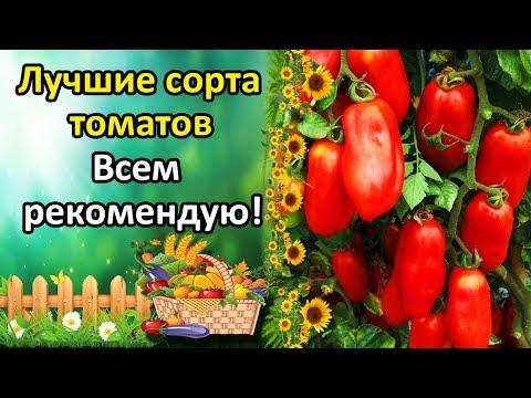 ЛУЧШИЕ СОРТА ТОМАТОВ ОТ КОТОРЫХ НЕ ОТКАЖУСЬ И ВСЕМ РЕКОМЕНДУЮ! ОБЗОР УРОЖАЙНЫХ СОРТОВ. | урожайные | помидоры | томатов | вкусные | томаты | сортов | лучшие | томат | сорта | обзор