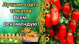 видео Лучшие сорта помидоров для открытого грунта. Обсуждение на LiveInternet