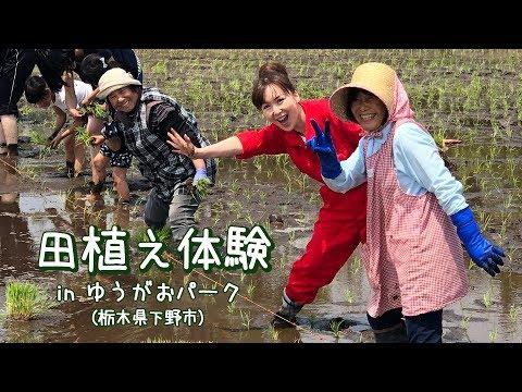 栃木県下野市で農業体験! 田植えをしてみよう!