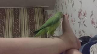 Танцы с пальцем ноги