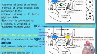 (CVS) 3  The Sinus Venosus