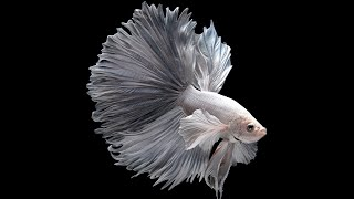 10 Most Beautiful Fishes on Planet Earth