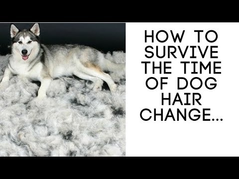 How To Survive The Time Of Dog Hair Change
