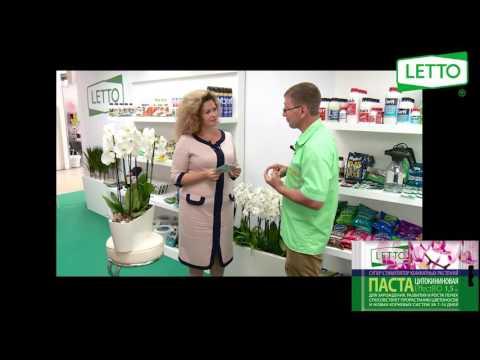 Цитокининовая паста LETTO - суперстимулятор для комнатных цветов