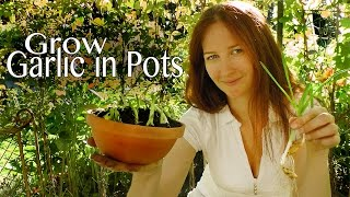 Garlic Chives: Grow garlic greens in pots - How to Grow a Garden with Scarlett