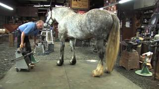 Shoeing a Draft Horse  Tips and Techniques Part 2 (Rear Hoof Trimming)