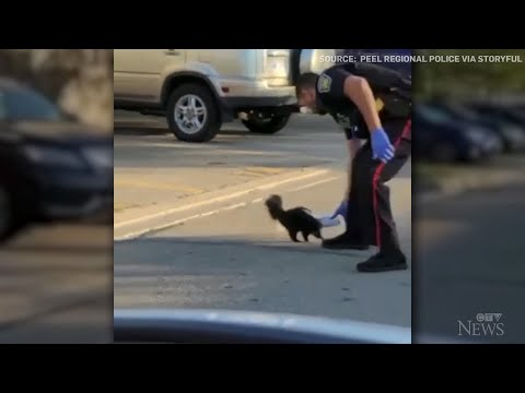 Caught-on-cam-Officer-removes-cup-stuck-on-skunks-head