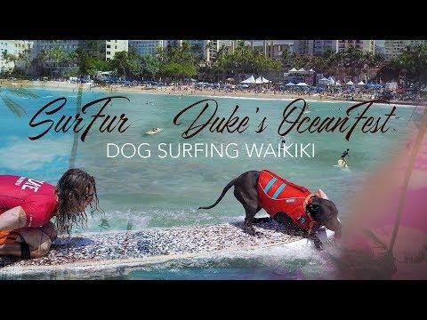 Dog Surfing ComPETition Waikiki 4K | Duke's OceanFest 2019 (SurFur Aug. 20th)