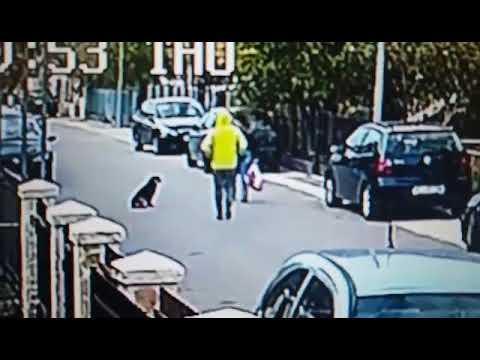Pas spasio zenu od lopova Podgorica, Stari aerodrom