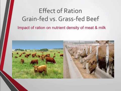 Holistic Animal Health and Nutrition, Grazing and Pasture Management Systems
