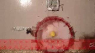 My hamster can not manage to stop spinning in his wheel
