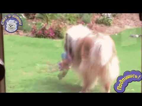 Мультфильм что делают собаки когда хозяев нет дома