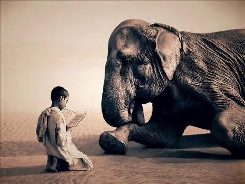 Rachel Yamagata - Elephants (lyrics)
